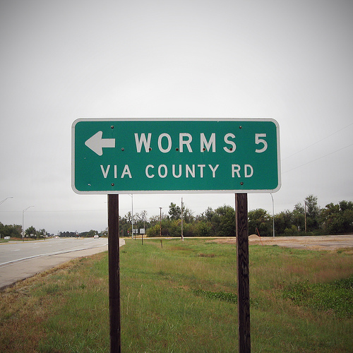 01-worms